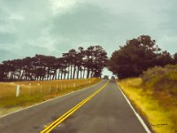 Petaluma Road to Bodega Bay
